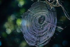 Glänzendes spiderweb stockbilder