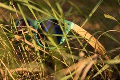 Gläser im Gras Stockfoto