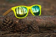 Gläser im Wald Lizenzfreies Stockbild