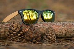 Gläser im Wald Stockfotos