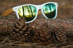 Gläser im Wald Lizenzfreie Stockbilder