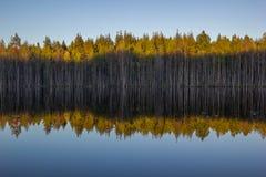 Glättung des blauen Himmels und der Bäume mit Schatten in der Wasser-Reflexion stockfotografie