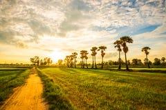 Glättung von Feldern Thailand Stockfoto