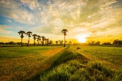 Glättung von Feldern Thailand 6 Lizenzfreie Stockfotos
