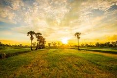 Glättung von Feldern Thailand 5 Lizenzfreie Stockfotos