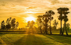 Glättung von Feldern Thailand 7 Lizenzfreie Stockfotografie