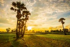 Glättung von Feldern Thailand 3 Lizenzfreies Stockfoto