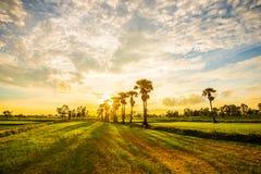 Glättung von Feldern Thailand 2 Lizenzfreies Stockfoto