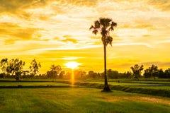 Glättung von Feldern Thailand 13 Stockbild