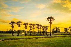 Glättung von Feldern Thailand 11 Lizenzfreies Stockfoto