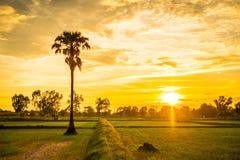 Glättung von Feldern Thailand 12 Stockfoto