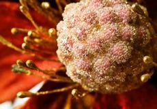 Glóbulos cristalinos en la flor ornamental Imagenes de archivo