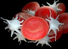 Glóbulos vermelhos e plaqueta ou plaquetas sanguínea ativados ilustração do vetor