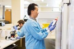 Glóbulos vermelhos no laboratório do hospital imagem de stock