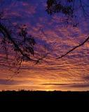 Glória da manhã Imagens de Stock