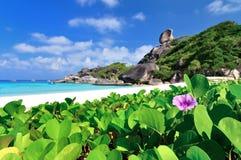 Glória da manhã do mar na praia Fotografia de Stock