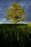 Glória das naturezas Imagem de Stock Royalty Free