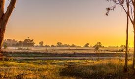 Glória de manhã Fotografia de Stock