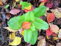Glória do jardim Fotos de Stock