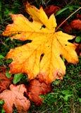 Glória do outono Foto de Stock Royalty Free