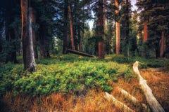 Glöd i skogen royaltyfri fotografi