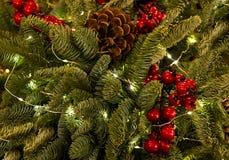 Glöda för girland för gran för bula för garnering för grönt tjockt fluffigt julgranjärnekbär rött traditionellt Royaltyfria Bilder