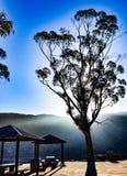 Glödande eukalyptus på picknickområde Fotografering för Bildbyråer