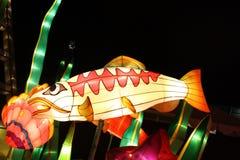 Glödande kinesisk lyktafisk Arkivbild
