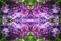 Glödande lila portal till en annan värld Fotografering för Bildbyråer
