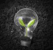 Glödande ljus kula med växten som glödtråd fotografering för bildbyråer