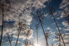 Glödande ljus och rör av den stora växten Arkivfoton