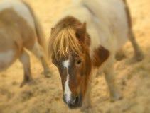 Glödande mjuk ponnystående Royaltyfria Bilder