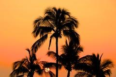 Glödande orange solnedgång och palmträd Arkivbilder