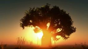 Glödande sol och träd för dimma lager videofilmer