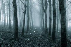 Glödande spöklika ljus som svävar i ett dimmigt, vinterskog med en kall blått för att redigera arkivbilder