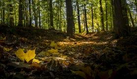 Glödande stupade sidor på en skogsbevuxen slinga i höst royaltyfria bilder
