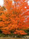 Glödande träd Royaltyfria Foton