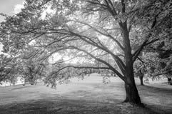 Glödande träd arkivfoto