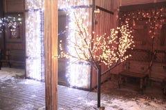 Glödande träd nära huset på julhelgdagsafton arkivbilder