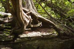 glödande tree Arkivfoton