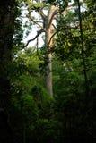 glödande tree Arkivbilder