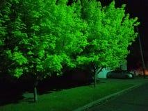 glödande trees royaltyfri foto