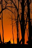 glödsolnedgång Arkivfoto