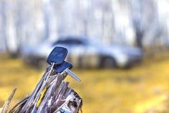 Glömda biltangenter på ett träd i en höstskog, en bakgrund av en suddig bil royaltyfri foto