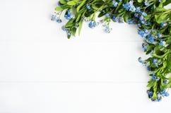 Glömma-mig-nots blommagräns Fotografering för Bildbyråer