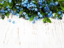 Glömma-mig-nots blommor Arkivbilder