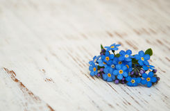 Glömma-mig-nots blommor Arkivbild