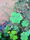 Glück der Iren Stockfotografie