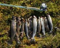 Glück des Fischers lizenzfreie stockfotografie