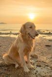Glückhund mit Sonnenuntergang Stockbild